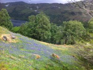 Loch Lomond in the distance; the foreground blue is bluebells.